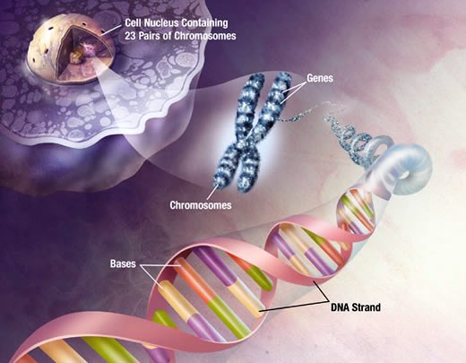 Human Genetic Engineering Cons
