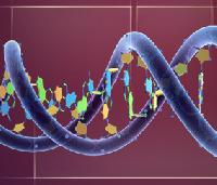 Human Genetics Research